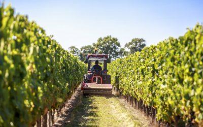 5 conseils pour communiquer en images sur son domaine viticole